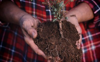 Reserve your tree for the Vulcan Day of Service